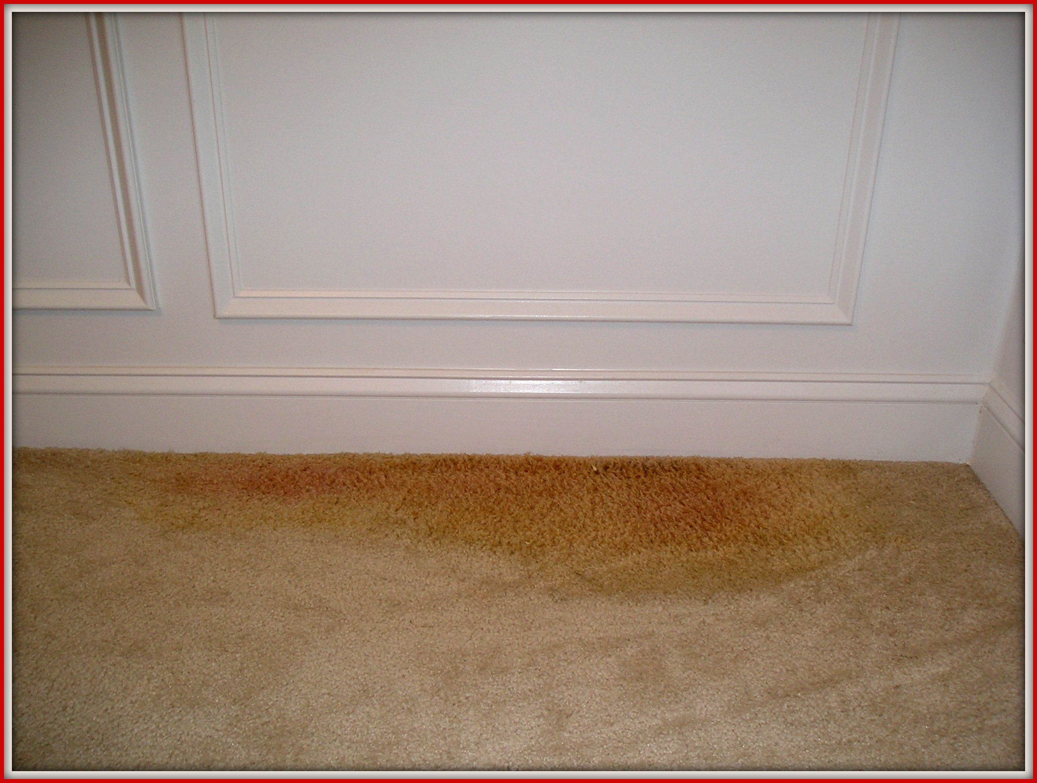 Remove Pet Odours From Carpet