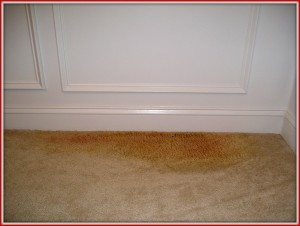 carpet replacement due to urine damage